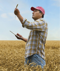 Man in a field looking at crops